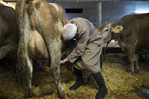 Zahl der Strafanzeigen gegen Tierhalter steigt