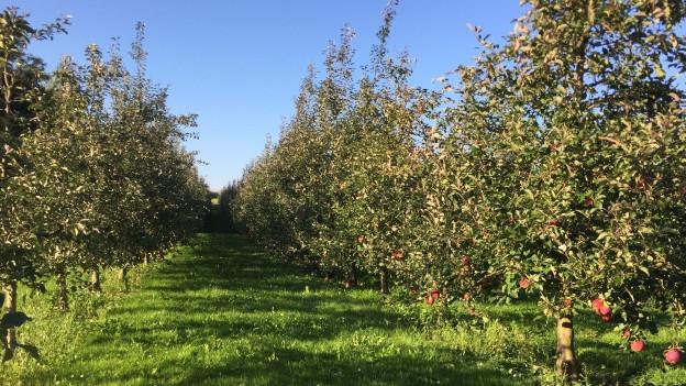 """Wie die Apfelbäume, so """"blühen"""" auch die Thurgauer Finanzen."""