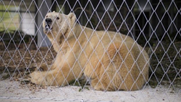 Der erste von fünf Bären ist im Arosa Bärenpark eingetroffen.
