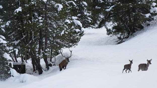 Gegnern ist die Sonderjagd im Nationalpark ein Dorn im Auge.
