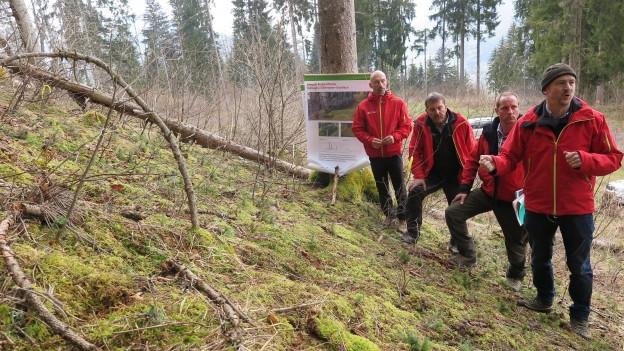 In der Surselva gibt es Probleme mit der Waldverjüngung.