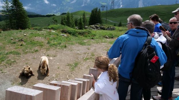 Zwei bären und Touristen