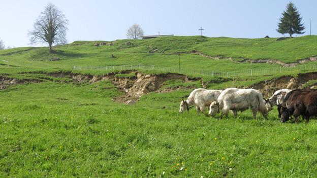 30 Hektaren sind oberhalb des Sarnersees in Bewegung.