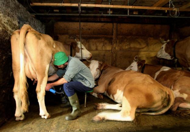 Bauern erhalten mehr Geld für ihre Sommermilch