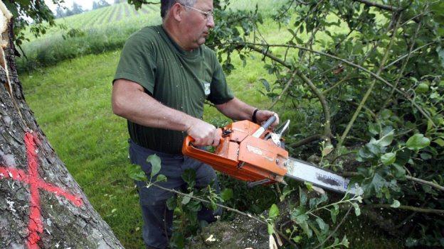In der Stadt Luzern sollen 128 Bäume gefällt werden.