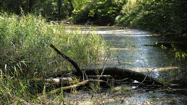 Der Gewässerschutz wird im Kanton Zug vorläufig noch nicht angepasst.