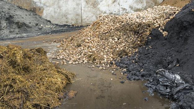 Biomasse für Biogasanlage