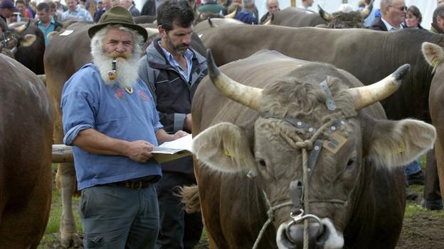 Der Stier steht im Mittelpunkt des Interesses.