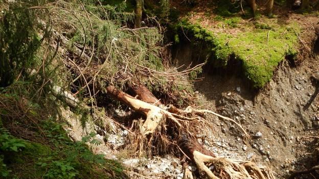 Umgestürzter Baum in einer Geröllhalde.