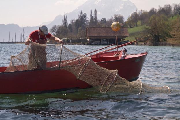 Die Fänge der Berufsfischer sind geregelt.