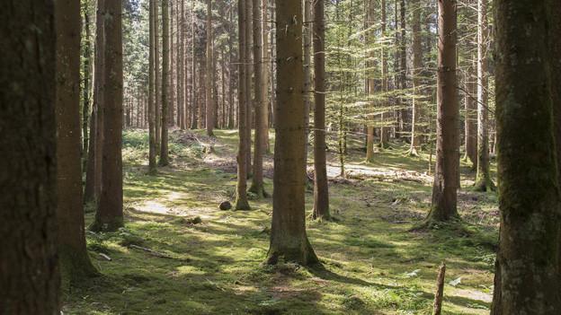 Blick in einen Wald.