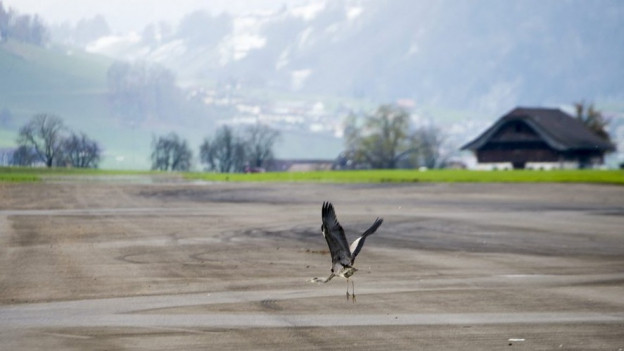 Der Flugplatz Buochs (2013).