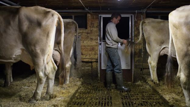 Bauer mit Kühen im Stall.