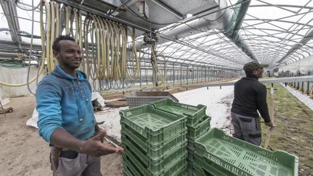 Flüchtlinge finden unter anderem auch in der Landwirtschaft Beschäftigungsmöglichkeiten.