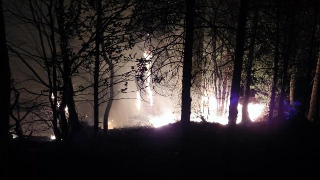 Nächtliche Aufnahme eines Waldbrandes.