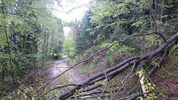 Beschädigte Bäume wegen Schnee im Frühling.