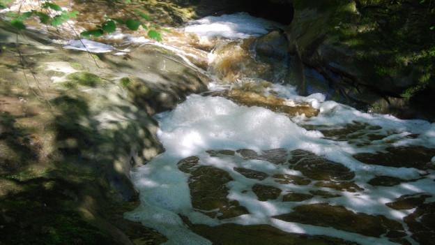 Der Fischbach sowie der Rümlig wurden durch die Gülle verschmutzt.