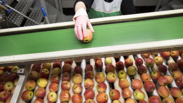 Äpfel auf einem Förderband.
