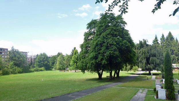Friedhof Staffeln in Reussbühl wird zum Waldfriedhof