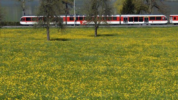 Eine Komposition der Zentralbahn fährt auf der Brünigstrecke.