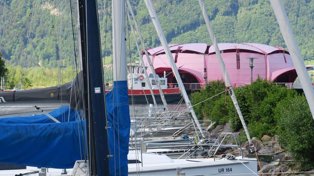 Seerose im Hafen von Flüelen.