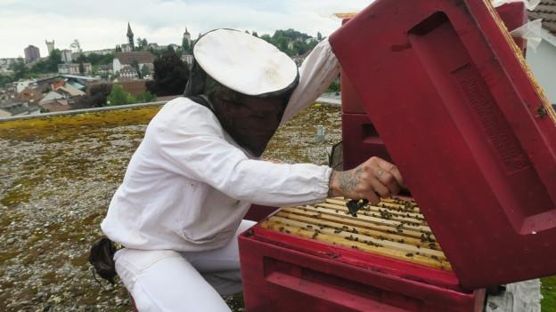 Ein Imker öffnet einen Bienenstock.