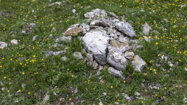 Stein auf Wiese mit Blumen