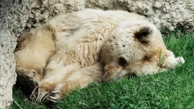 Fränzi starb 35-jährig im Tierpark Goldau.