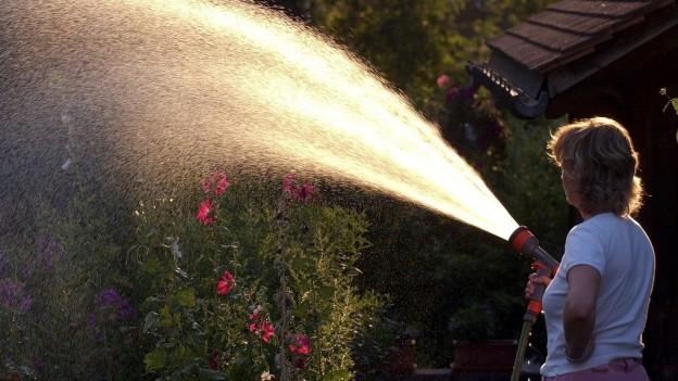 Garten giessen unerwünscht: Sursee ruft zum Wasser sparen auf