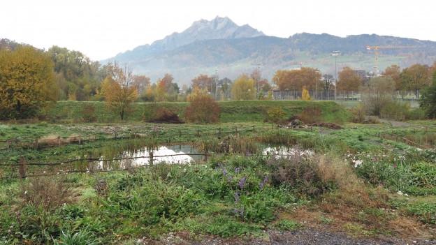 Artenvielfalt in der Stadt Luzern