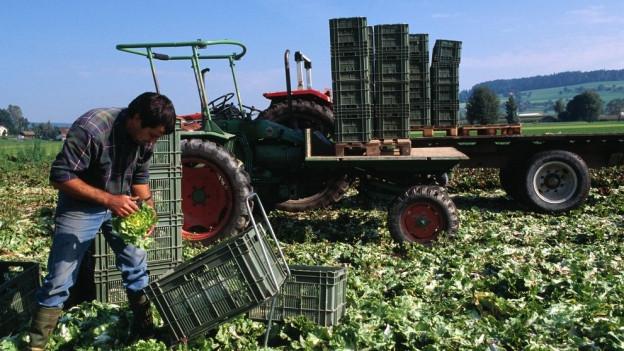 Mit der Landwirtschaft sind viele Arbeitsplätze verbunden.