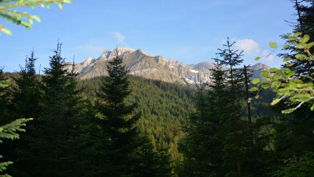 Im Waldreservat soll das Auerhuhn optimal leben können