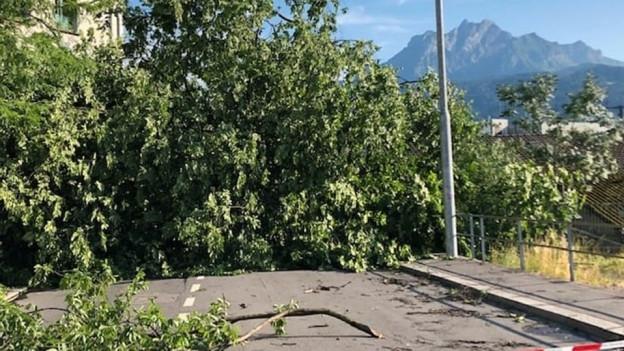 Umgestürzte Bäume vor dem Berg Pilatus.