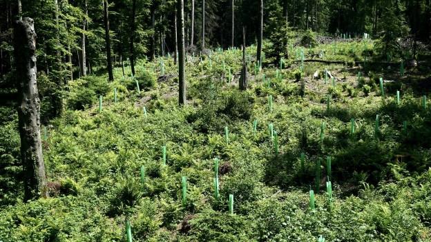 Der Wald muss fit sein für die Zukunft.