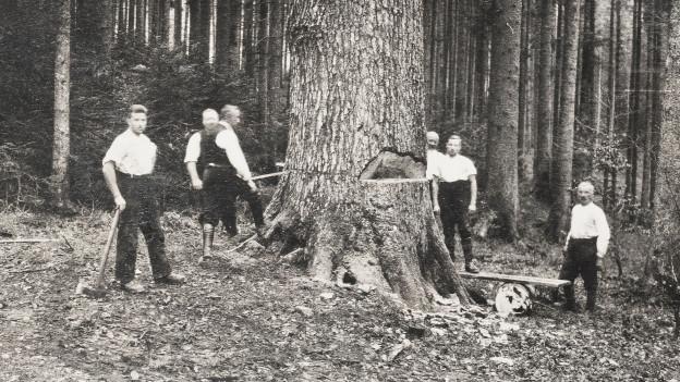 Männer fällen einen Baum.