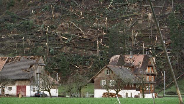 Zerstörtes Bauernhaus und und zerstörter Wald