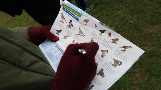 An der Stunde der Wintervögel wurde der Hausspatz am häufigsten beobachtet.