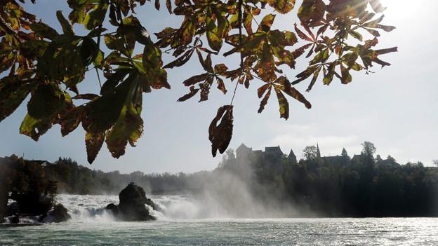 Der Rheinfall: Naturerbe oder Energiequelle?