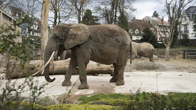 Nasse Füsse für die Tiere im Basler Zoo bei Hochwasser.