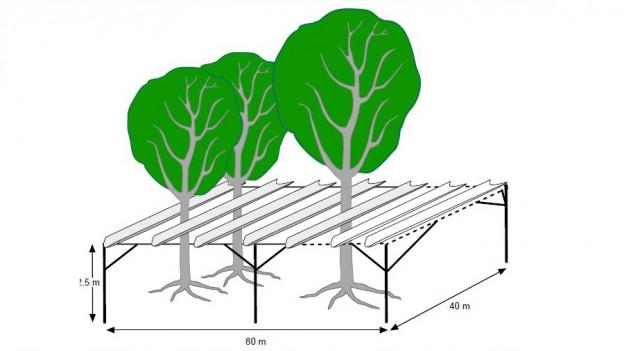 Skizze des Projektes, Bäume, Dach