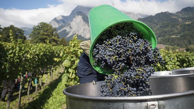 Bio-Wein sei ein Bedürfnis der Kundschaft.