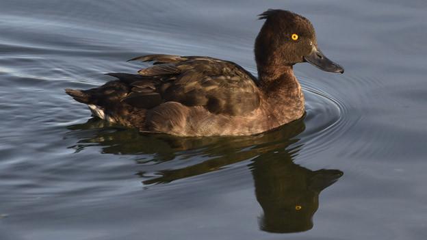 Bei toten Vögeln wurde das Virus H5N8 nachgewiesen.