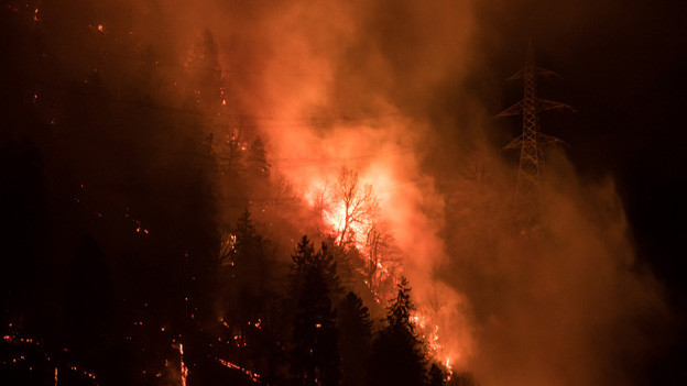 Die Feuer zerstörten über 100 Hektaren Schutzwald.