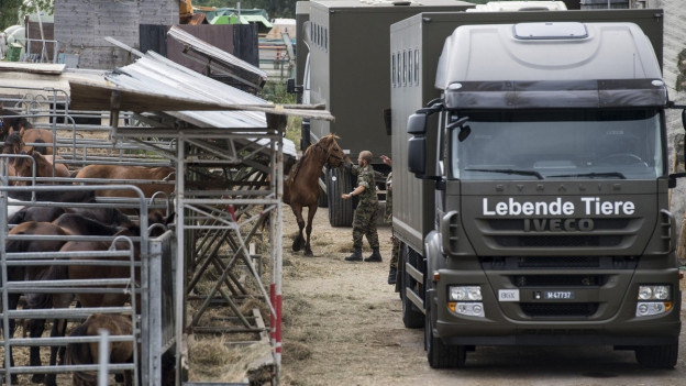 Militär transportiert Pferd ab, grosser grüner Lastwagen