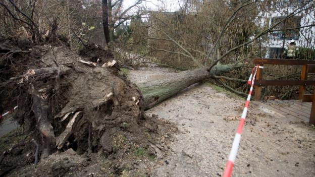 Zahlreiche Bäume sind wegen Burglind umgestürzt