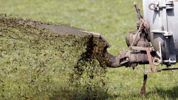 Ein Bauer bringt «Gülle» auf eine Wiese.