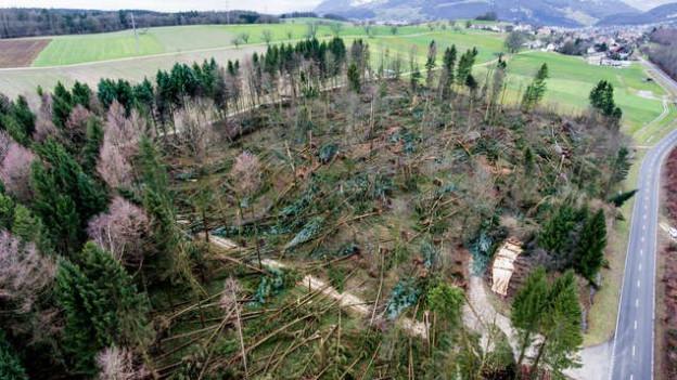 Burglind hat viel Holz «geschlagen».
