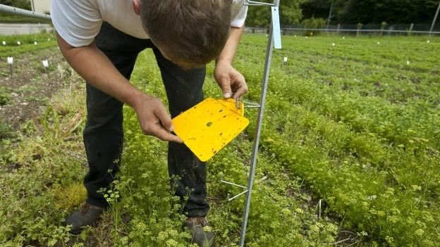 Agroscope in Wädenswil. Ein Forscher bei der Arbeit.