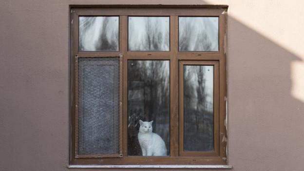 Eine Katze, die am Fenster sitzt.