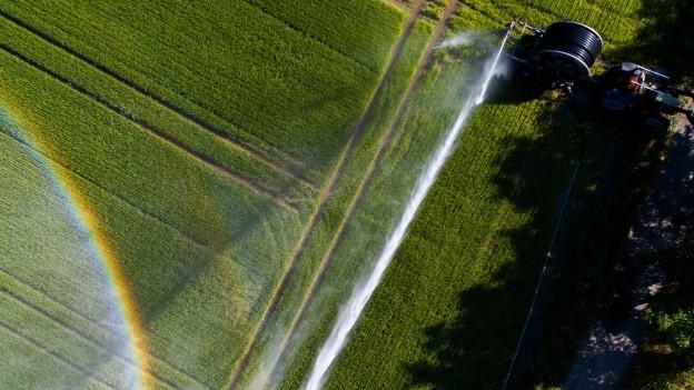 Luftaufnahme eines Reisfeldes im Tessin